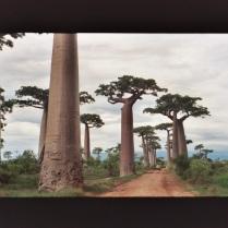 Una avenida de Baobas (Madagascar) DÍA 1: VUELO BARCELONA • ANTANANARIVO Presentación en el aeropuerto a la hora acordada y embarque con destino Antananarivo. Noche a bordo. DÍA 2: ANTANANARIVO Llegada al Aeropuerto Internacional de Ivato en Antananarivo y recepción por parte del guía. Traslado al hotel en el centro de la capital. Alojamiento. DÍA 3: ANTANANARIVO • ANTSIRABE • MIANDRIVAZO Desayuno, y salida muy temprano hacia el sur para atravesar un tramo de Tierras Altas hasta la ciudad de Antsirabe, breve parada para aprovisionarse. Continuación hasta Miandrivazo, a orillas del río Tsiribihina, donde dará comienzo nuestra expedición, almuerzo libre en ruta antes de llegar a Miandrivazo. Llegada a primera hora de la tarde a esta población y trámites burocráticos por parte del guía de Indigo Be en el Ayuntamiento y en la Gendarmería Nacional, declaración de los participantes en el descenso del río, pago de tasas locales, etc. Los viajeros podrán pasear por esta pequeña ciudad o simplemente descansar en el hotel mientras el guía realiza los trámites legales. Alojamiento. Trayecto por carretera de 380 Km // 7 hrs aprox. DÍA 4: MIANDRIVAZO • DESCENSO POR EL RÍO TSIRIBIHINA Desayuno y salida desde el embarcadero en canoas tradicionales Sakalava • menabe para navegar las aguas de este río del oeste malgache. Breve visita del poblado de pescadores de Anzabato la etnia sakalava donde intentaremos proveernos de pescado fresco para almorzar. Seguiremos navegando hasta una zona alboreada donde tomaremos el almuerzo. Llegada por la tarde al primer campamento. El río Tsiribihina posee paisajes cambiantes en los que destacan los contrafuertes de la cadena montañosa de Bongolava. Se trata de uno de los ríos más grandes y largos de Madagascar y el más importante de la zona Oeste de la isla. Durante nuestra sosegada navegación podremos observar diversas especies de aves acuáticas, destacando el martín pescador, el coucal malgache, el ardea cinérea, el ardeola idea y el cua petirro