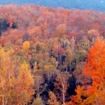 Un otoño rojo (Estados Unidos)