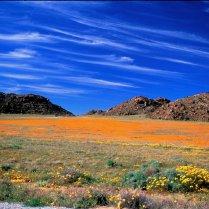 El desierto que se transforma en primavera (Sudáfrica / Namibia)