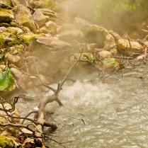 Una jungla a punto de ebullición (Costa Rica)
